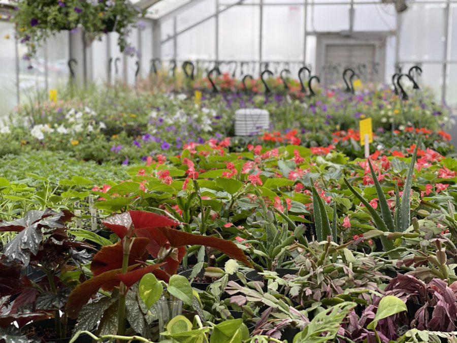Spring Plant Sale Benefits Agriscience Program, Petit Family Foundation