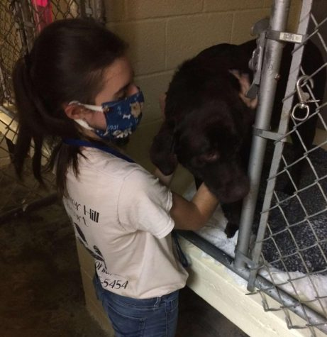 Senior Meghan Kostka working at her SAE. Kostka is taking care of the animals and cleaning their cages to ensure sanitary conditions.