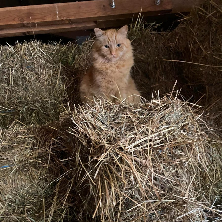Where's Toby? Nonnewaug's Favorite Feline Friend is Enjoying His Retirement